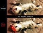 Lil Allergies.jpg