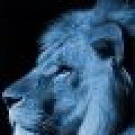 Cobalt Lion