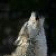 whitewolf35