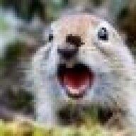 ArcticSquirrel
