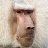 Monkeybald