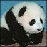Pandabearparade