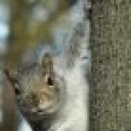 Angry_squirrel