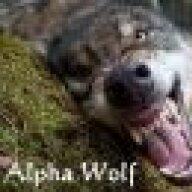 AlphaWolf13