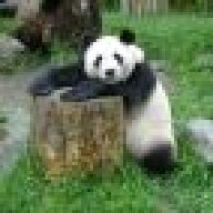 panda_communist