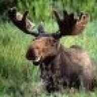 Meanmoose
