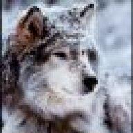 tanithwolf