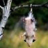 Ossum