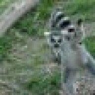 Lemur_Ninja