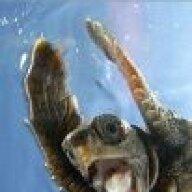 happy_turtle
