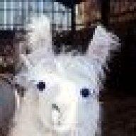 Sneaky llama